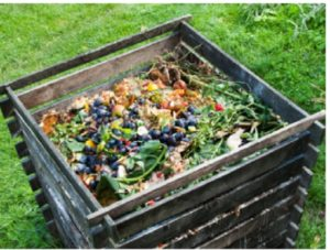 Sustainable Gardening Tips for a Green Garden