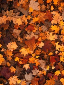 Fall Landscape Maintenance Checklist