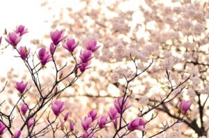 Why Your Flowers Aren't Blooming