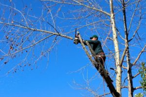 Common Tree Pruning Errors