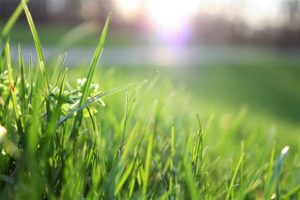 Problems That Can Compromise Your Lawn