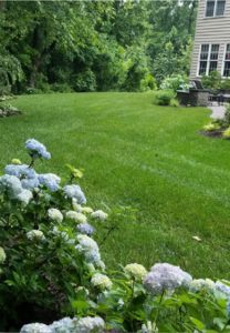 What You Can Do For Your Outdoor Landscape to Start the New Year Right