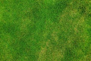 How You Can Revive Your Lawn