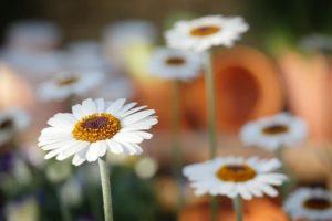 Gardening Tips to Start Off Your Spring Season