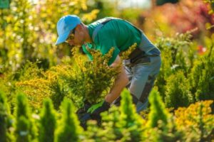 Landscape Maintenance Services a Landscaping Company Can Offer During the Summer