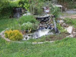 Keeping Your Pond in Good Condition This Summer