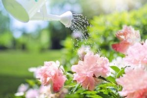 Why to Pick Morning to Water Your Plants Instead of Night