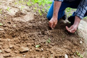 Soil Vs. Dirt: Knowing the Differences