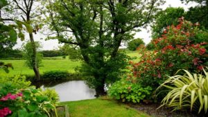 Why Install a Backyard Pond During Fall